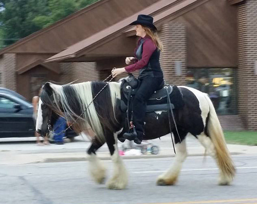 Our Latest Gypsy Vanner Feature!
