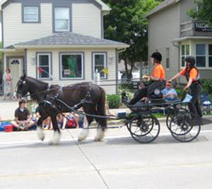 Sold horse Duncan pulling carriage with 2 people